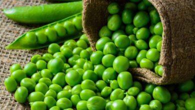 Photo of हरियो मटरमा पाइन्छ भिटामिन ए, बी, के र सीः मधुमेहका बिरामीका लागि फाइदाजनक, तौल पनि घटाउँछ