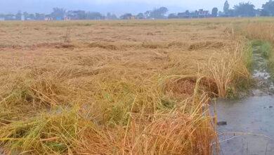 Photo of अझै तीन दिन भारी बर्षा, किसान मर्कामा